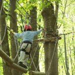 a scuola sugli alberi